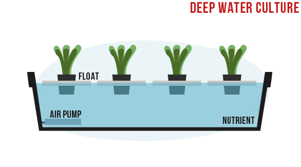 deep water culture